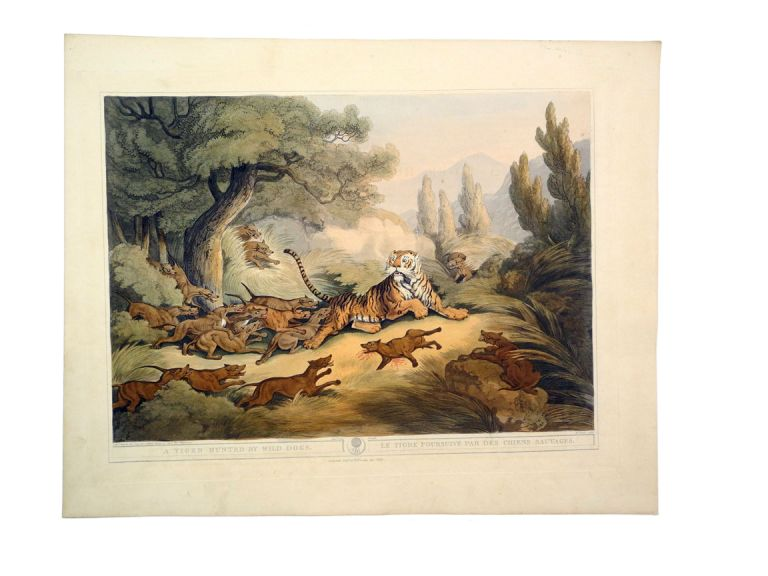 ORIENTAL FIELD SPORTS; Tiger Hunted by Wild Dogs. Williamson T.